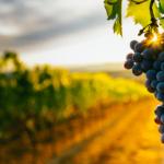 Il settore Vitivinicolo e delle Distillerie: le priorità del momento
