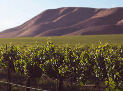WINE & TECH: Budget e Controllo per migliorare la competitività delle aziende vinicole