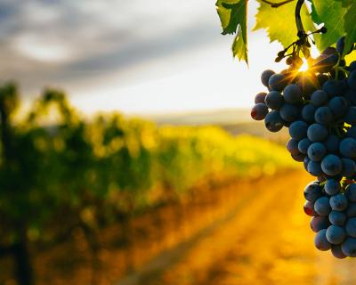 locandina vinicoli